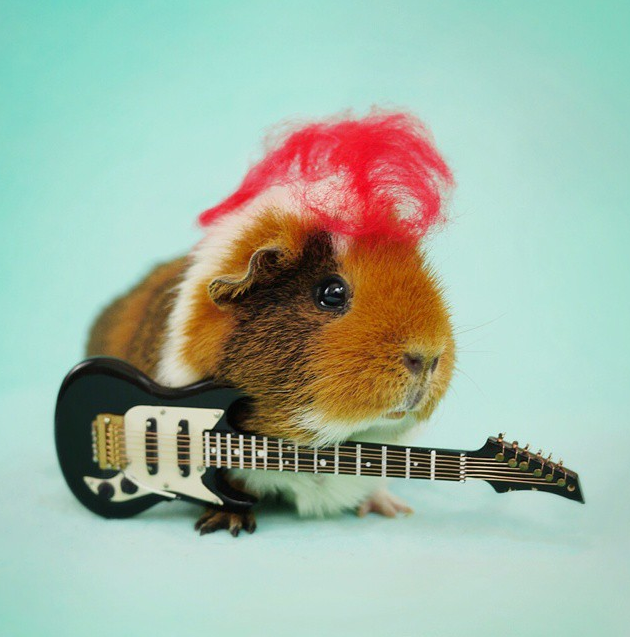 fuzzberta guitare