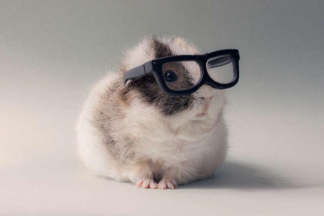 guinea-pig-booboo-lieveheersbeestje-23-L.jpg